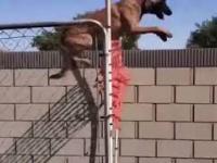 Świetnie wyszkolony pies
