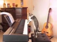 Kot przyłapany na graniu na pianinie