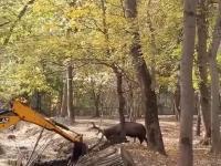 Jeleń staje w obronie lasu