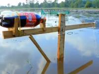 Łowienie rybki metodą na coca colę