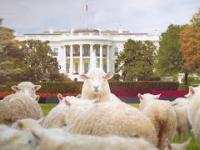 Najlepsze ciekawostki o BYŁYCH prezydentach USA