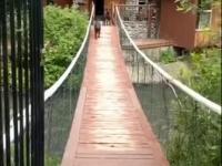Pies przechodzi przez most