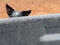 Pies nawadnia teren