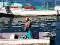 Pelikan przyleciał się przytulić