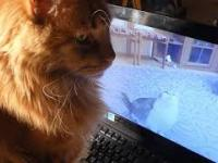 Kotek Karotek ogląda filmik na Youtube