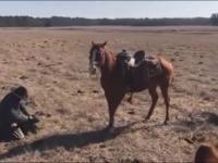 Koń obronny