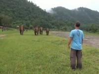 Wielka radość słoni ze spotkania z przyjacielem