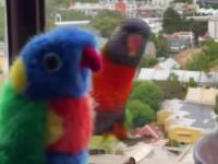 papugi z wizytą