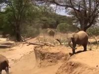 Lekcja dla słonia