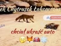 Lisek Chytrusek Łakomczuszek chciał ukraść auto ????????????❄️ The fox wanted to steal the car