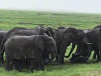 Narodziny słoniątka