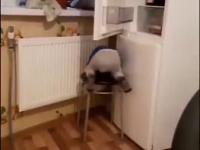 Wezmę sobie krzesełko to zdobędę mleko