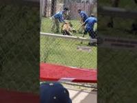 Atak tygrysa i szybka akcja pracowników zoo
