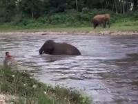 Słoniątko pędzi na ratunek tonącemu człowiekowi