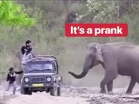 Słoń dowcipniś