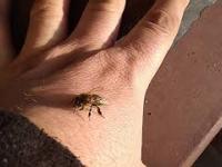 Jedna pszczoła wiosny nie czyni