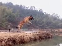Psy to potrafią skakać