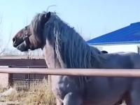 Ale bydle z tego konia