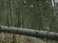 Roboty w lesie mogą być całkiem przyjemne