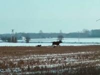 Tymczasem gdzieś na polu w Polsce