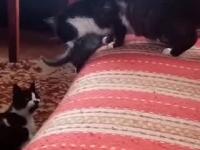 kotek na tapczanie