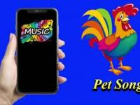 Pet Song