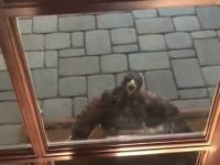 Krzyk ptaka