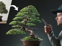 Odnowienie zaniedbanego drzewka bonsai