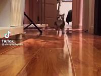 Bieg małego koteczka