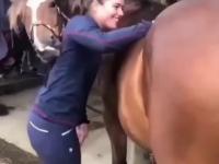 czochranie konia
