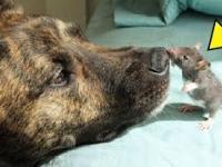 Pies cierpiał na depresję, dopóki nie znalazł niezwykłego przyjaciela