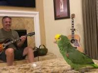 Ojciec: W naszym domu nie będzie żadnej papugi!