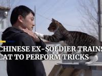 Chiński kot bojowy