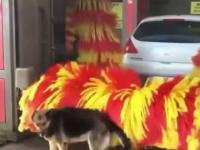Myjnia samochodowa dla psa