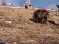 Kiedy w Rosji wyprowadzasz zwierzątko na spacer