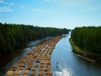 W ten sposób spławia się miliony drzew do tartaków w Finlandii