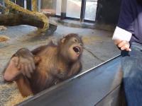 Małpa widzi magiczną sztuczkę