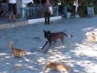 Koty atakują psa