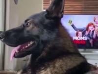 Życie z emerytowanym policyjnym psem takie jest