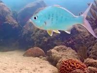 Żyroskopowo stabilna ryba
