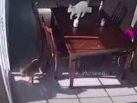 Zamach kota na życie psa