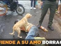 Pies wierny na zawsze