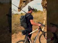 Rowerzysta spotyka ciekawska żyrafę