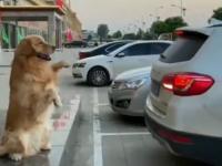 Inteligentny i niezawodny czujnik parkowania
