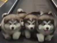 Pieski próbują dojść do celu