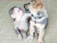 Mała małpka robi przegląd szczeniaka