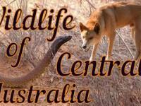 Dzika przyroda Australii