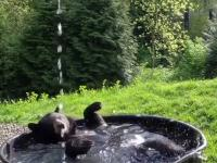 Nawet niedźwiedź ma jacuzzi w lesie