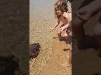 Ośmiornica podpływająca do brzegu...
