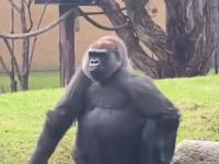 Casanova w zoo